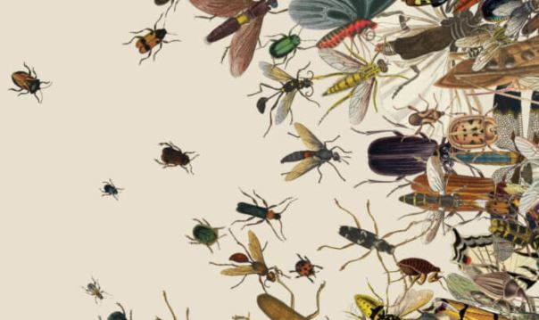 What will happen to the planet if all insects disappear?